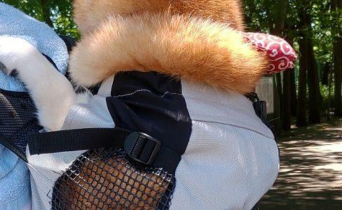 【K9スポーツサックレビュー】犬を背負って運べるリュック【柴犬】